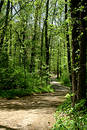 Forest Trail In Spring Royalty Free Stock Image - 142026