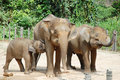 Elephants Stock Images - 14008144