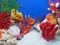 Underwater Colorful Stones, Color Diversity, Stock Images - 14014224