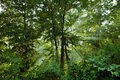 Forest Scene With Sunlight Stock Photo - 14033940