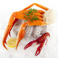 Seafood Served On Ice Stock Image - 14037051