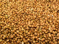 Much Buckwheat Croups Royalty Free Stock Images - 14039469
