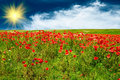 Beautiful Meadow By Summer. Royalty Free Stock Photo - 14050695