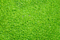 Soft Green Porous Texture, Surface. Stock Photography - 14059712