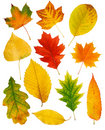 Fall Leaves Royalty Free Stock Image - 14061326