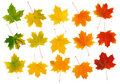 Fall Maple Leaves Stock Images - 14061374
