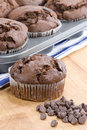 Chocolate Chip Muffins Royalty Free Stock Photos - 14061618