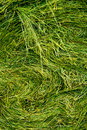 Hay Stack Texture Royalty Free Stock Image - 14064266