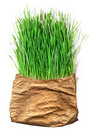 Green Grass In The Old Pack Royalty Free Stock Photos - 14065098