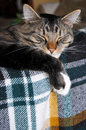 Cat Dozing On The Couch Stock Photos - 14065453