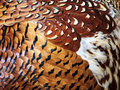 Feathers Stock Photography - 14070592