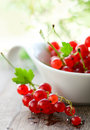 Red Currant Stock Photos - 14071773