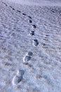 Footprint Tracks On A Links Golf Course Royalty Free Stock Image - 14088036