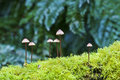Fungi Colony Growing From Moss-covered Log Stock Image - 14088161