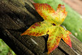 Leaf On A Trunk Stock Photography - 14088172