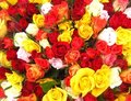 Colourful Flowers Royalty Free Stock Photo - 14097015