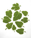 Green Leafs Royalty Free Stock Images - 1413659