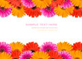 Many Gerberas And Blank Place For Text Stock Photos - 14100463