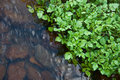 Watercress Stream Stock Images - 14103084