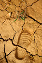 Dried Land With Step Print Stock Image - 14125001