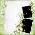 Fresh Spring Apple Tree  Flowers Frame Royalty Free Stock Photography - 14134677
