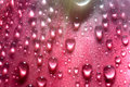 Beautiful Drops Of Water Stock Images - 14140164