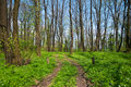 Path In A Forest Stock Photography - 14142332