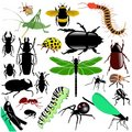 Set Of Insects Royalty Free Stock Images - 14152149
