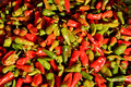 Red And Green Hot Peppers Stock Images - 14161884