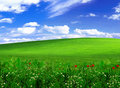 Green Field Stock Photography - 14166112