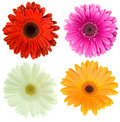 Set Of Gerbera Flowers Royalty Free Stock Images - 14166979