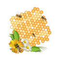 Bees And Flowers Royalty Free Stock Photography - 14173807
