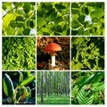 Spring And Summer Forest  Details With Mushroom 1 Stock Image - 14177971
