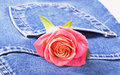 Jeans And Rose Royalty Free Stock Image - 14178536