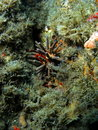 Urchin Stock Images - 14208124