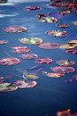 Lily Pads Background Royalty Free Stock Photography - 14238217
