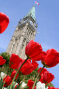Tulip At The Canadian Parliament. Stock Images - 14262544
