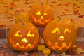 Halloween Jack-O-Lanterns Stock Photos - 14284073