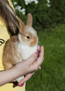 Rabbit Royalty Free Stock Images - 14291039