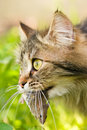 Cat And Mouse Stock Image - 14296151