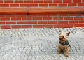 Lonely Dog Stock Image - 1431961