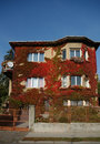 Red Ivy Covered House Stock Image - 1438171
