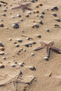 Starfish On The Sand Stock Photography - 14307392