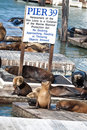 Sea Lions Stock Images - 14310824