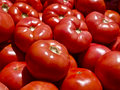 Tomatoes Royalty Free Stock Image - 14345876