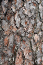 Close Up Of Tree Bark Stock Images - 14371244
