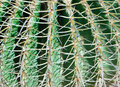 Cactus Background Stock Photos - 14391853