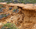 Collapsed Cliff In Torrey Pines State Park Stock Photography - 14421262