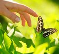 Eautiful Butterfly Stock Images - 14437854