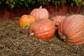 Pumpkins. Royalty Free Stock Photos - 14460438